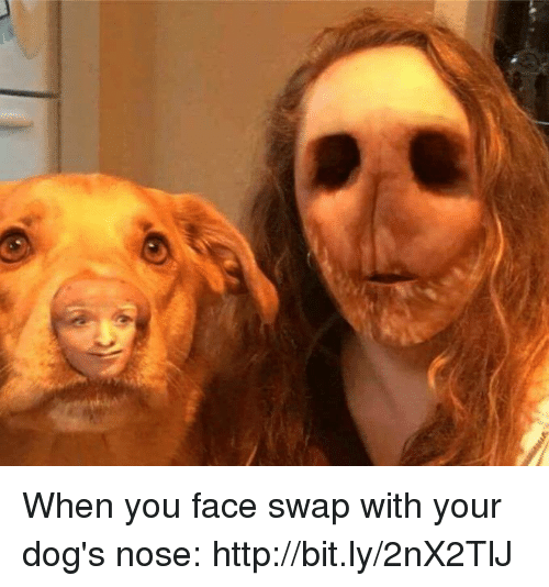 when you face swap with your dog s nose httpbitly2nx2tlj dank meme