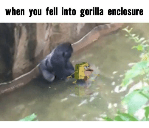 Dank Memes: when you fell into gorilla enclosure