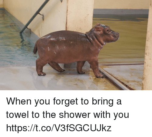 Shower, Girl Memes, and You: When you forget to bring a towel to the shower with you https://t.co/V3fSGCUJkz