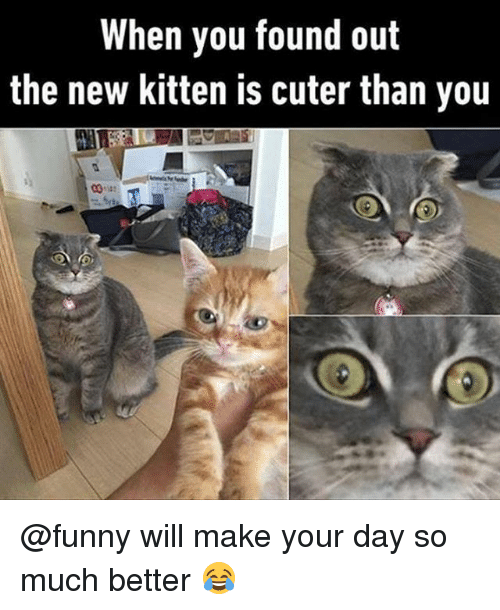 Funny, Kitten, and Day: When you found out  the new kitten is cuter than you @funny will make your day so much better 😂