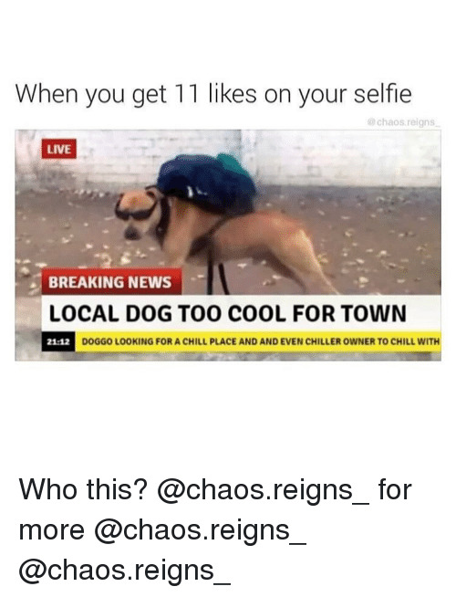 Chill, Memes, and News: When you get 11 likes on your selfie  @chaos.reigns  LIVE  BREAKING NEWS  LOCAL DOG TO0 COOL FOR TOWN  DOGGO LOOKING FOR A CHILL PLACE AND AND EVEN CHILLER OWNER TO CHILL W Who this? @chaos.reigns_ for more @chaos.reigns_ @chaos.reigns_