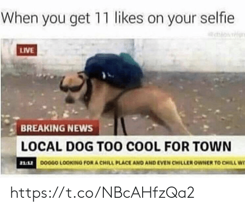 Chill, Memes, and News: When you get 11 likes on your selfie  relun  LIVE  BREAKING NEWS  LOCAL DOG TOo coOL FOR TOWN  DOGGO LOOKING FOR A CHILL PLACE AND AND EVEN CHILLER OWNER TO CHILL W https://t.co/NBcAHfzQa2