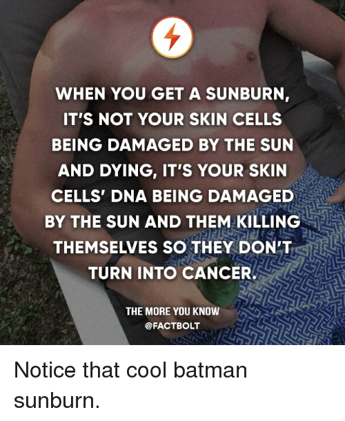 Batman, Memes, and The More You Know: WHEN YOU GET A SUNBURN  IT'S NOT YOUR SKIN CELLS  BEING DAMAGED BY THE SUN  AND DYING, IT'S YOUR SKIN  CELLS DNA BEING DAMAGED  BY THE SUN AND THEM KILLING  THEMSELVES SO THEY DON'T  TURN INTO CANCER.  THE MORE YOU KNOW  @FACT BOLT Notice that cool batman sunburn.