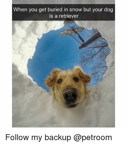 Funny, Snow, and Dog: When you get buried in snow but your dog  is a retriever Follow my backup @petroom