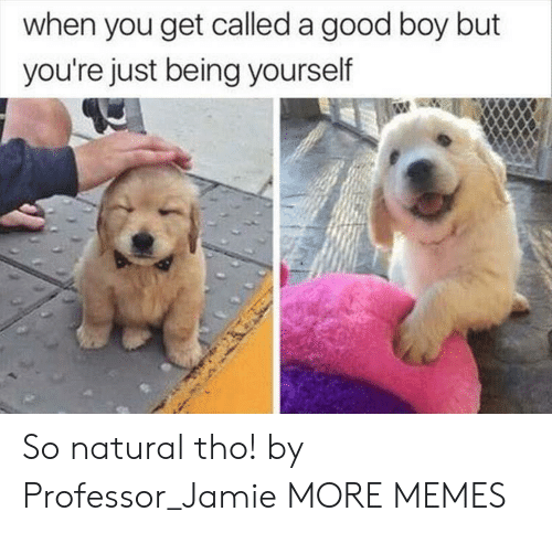 Dank, Memes, and Target: when you get called a good boy but  you're just being yourself So natural tho! by Professor_Jamie MORE MEMES