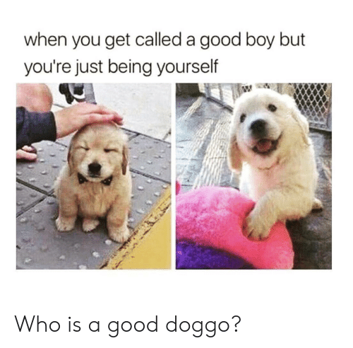 Good, Boy, and Doggo: when you get called a good boy but  you're just being yourself Who is a good doggo?