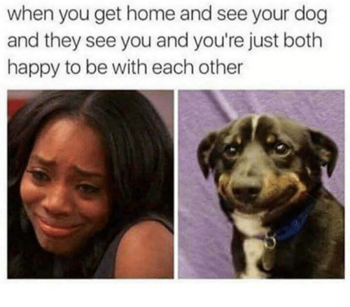 Memes, Happy, and Home: when you get home and see your dog  and they see you and you're just both  happy to be with each other