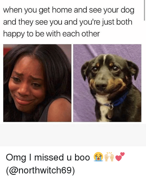 Boo, Memes, and Omg: when you get home and see your dog  and they see you and you're just both  happy to be with each other Omg I missed u boo 😭🙌🏼💕(@northwitch69)