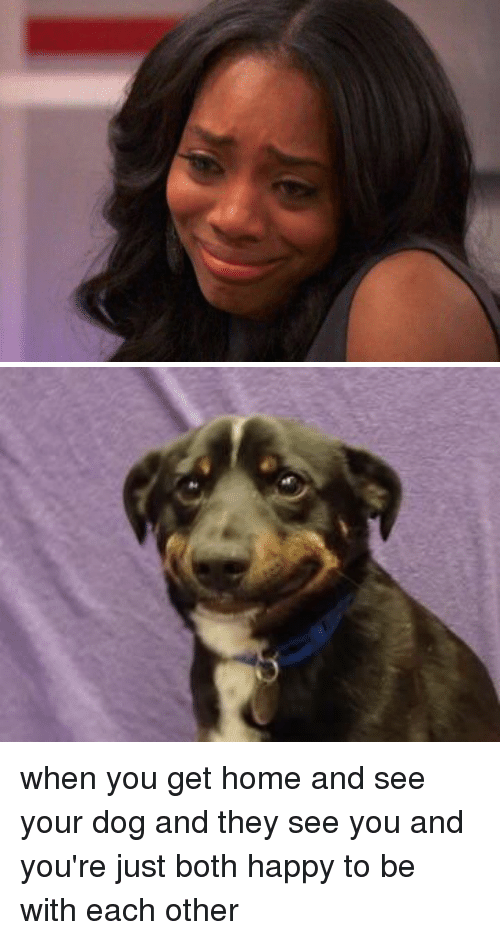 when you get home and see your dog and they 9650744 ✅ 25 best memes about when you get home when you get home memes,Get Home Meme