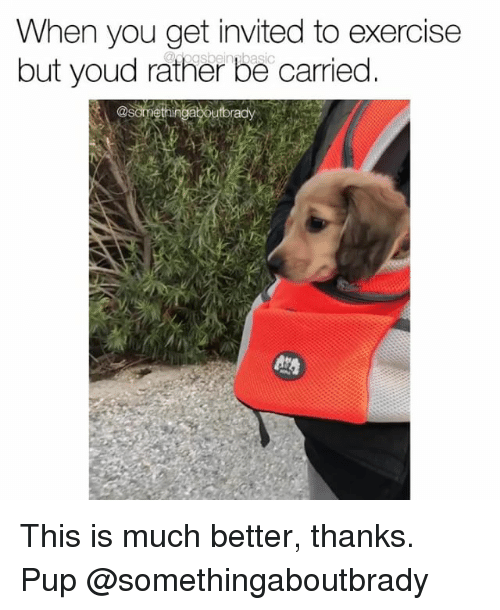Memes, Exercise, and Pup: When you get invited to exercise  but youd rather be carried This is much better, thanks. Pup @somethingaboutbrady