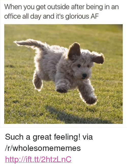 """Af, Http, and Office: When you get outside after being in an  office all day and it's glorious AF <p>Such a great feeling! via /r/wholesomememes <a href=""""http://ift.tt/2htzLnC"""">http://ift.tt/2htzLnC</a></p>"""