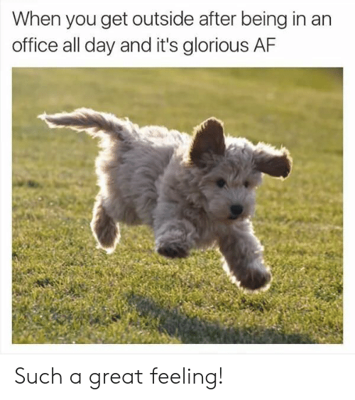 Af, Office, and Glorious: When you get outside after being in an  office all day and it's glorious AF Such a great feeling!