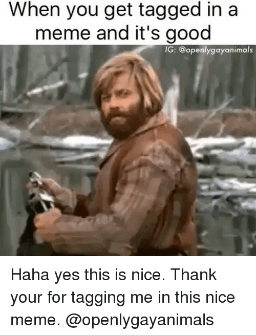 when you get tagged in a meme and its good 23612909 ✅ 25 best memes about nice meme nice memes