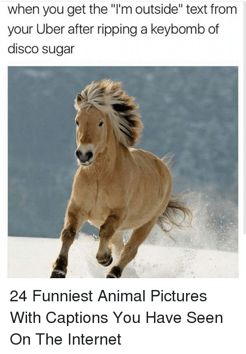 """Internet, Uber, and Animal: when you get the """"l'm outside"""" text from  your Uber after ripping a keybomb of  disco sugar 24 Funniest Animal Pictures With Captions You Have Seen On The Internet"""