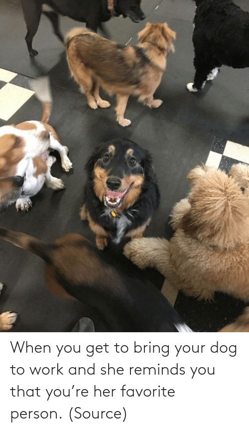 Aww, Reddit, and Target: When you get to bring your dog to work and she reminds you that you're her favorite person. (Source)