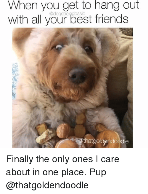 Friends, Memes, and Best: When you get to hang out  with all your best friends  @dogsbeingbasic  thatgoldpndoode Finally the only ones I care about in one place. Pup @thatgoldendoodle
