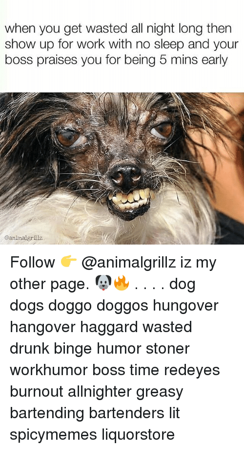 Dogs, Drunk, and Lit: when you get wasted all night long then  show up for work with no sleep and your  boss praises you for being 5 mins early  @animalgrillz Follow 👉 @animalgrillz iz my other page. 🐶🔥 . . . . dog dogs doggo doggos hungover hangover haggard wasted drunk binge humor stoner workhumor boss time redeyes burnout allnighter greasy bartending bartenders lit spicymemes liquorstore