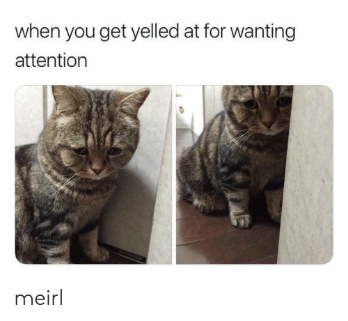 MeIRL, You, and For: when you get yelled at for wanting  attention meirl