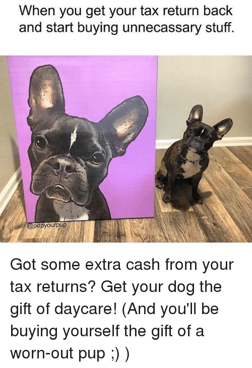 When you get your tax return back and start buying unnecassary stuff memes and dog when you get your tax return back and start solutioingenieria Choice Image