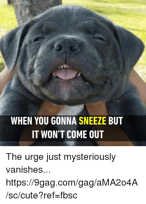 9gag, Cute, and Dank: WHEN YOU GONNA SNEEZE BUT  IT WON'T COME OUT The urge just mysteriously vanishes... https://9gag.com/gag/aMA2o4A/sc/cute?ref=fbsc