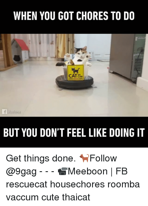 funny roombas memes of 2017 on on the floor. Black Bedroom Furniture Sets. Home Design Ideas