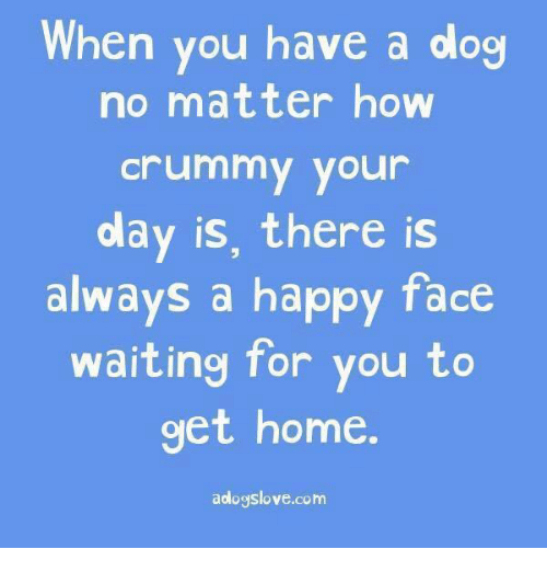 Dank, Dogs, and Happy: When you have a dog  no matter how  Crummy your  olay is, there is  always a happy face  waiting for you to  get home  aologslove.com