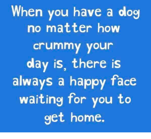 Dank, Happy, and Home: When you have a dog  no matter how  Crummy your  olay is, there is  always a happy face  waiting for you to  get home.