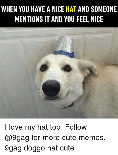 9gag, Cute, and Love: WHEN YOU HAVE A NICE HAT AND SOMEONE  MENTIONS IT AND YOU FEEL NICE I love my hat too! Follow @9gag for more cute memes. 9gag doggo hat cute