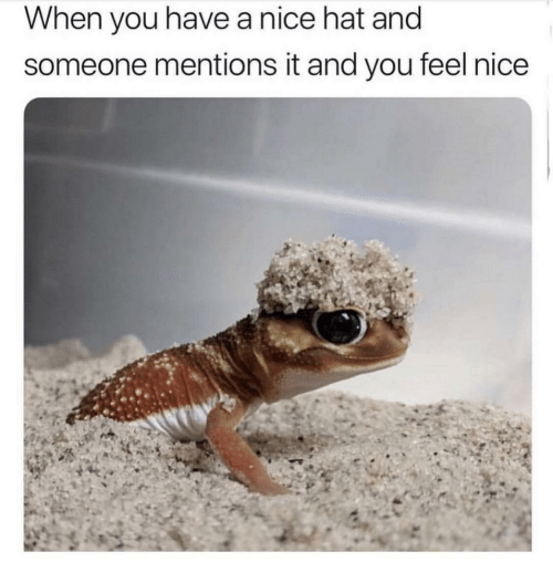 Nice, You, and Hat: When you have a nice hat and  someone mentions it and you feel nice