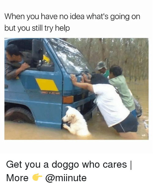 Funny, Help, and Doggo: When you have no idea what's going on  but you still try help Get you a doggo who cares | More 👉 @miinute