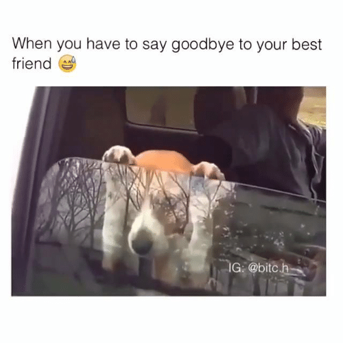 25+ Best Saying Goodbye To Your Best Friend Memes