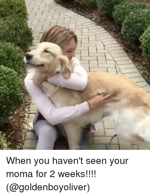 Memes, Moma, and 🤖: When you haven't seen your moma for 2 weeks!!!! (@goldenboyoliver)