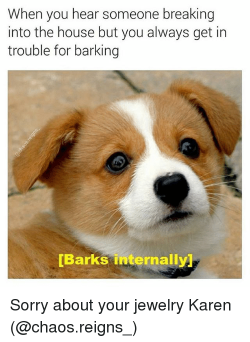 Funny, Sorry, and House: When you hear someone breaking  into the house but you always get in  trouble for barking  Barks internally Sorry about your jewelry Karen (@chaos.reigns_)