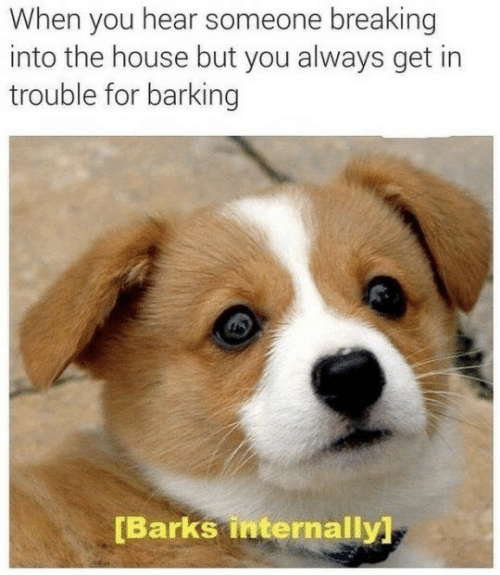 House, You, and For: When you hear someone breaking  into the house but you always get in  trouble for barking  [Barks internally
