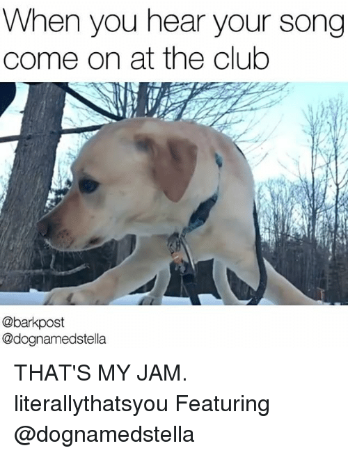 Memes, 🤖, and Jam: When you hear your song  come on at the club  @bark post  @dognamedstella THAT'S MY JAM. literallythatsyou Featuring @dognamedstella