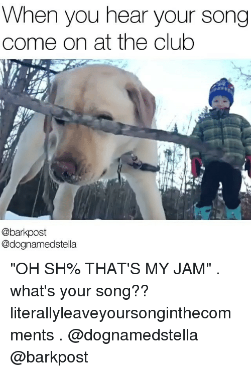 "Memes, 🤖, and Jam: When you hear your song  come on at the club  @barkpost  @dognamedstella ""OH SH% THAT'S MY JAM"" . what's your song?? literallyleaveyoursonginthecomments . @dognamedstella @barkpost"