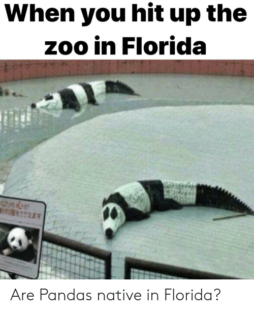 Florida, Zoo, and Pandas: When you hit up the  zoo in Florida Are Pandas native in Florida?