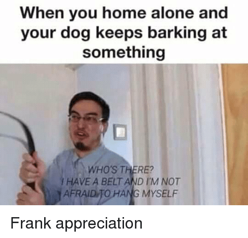 Being Alone, Home Alone, and Home: When you home alone and  your dog keeps barking at  something  WHO'S THERE?  / HAVE A BELT AND IM NOT  AFRAID TO HANG MYSELF Frank appreciation