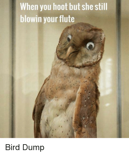 Flute, She, and You: When you hoot but she still  blowin your flute Bird Dump