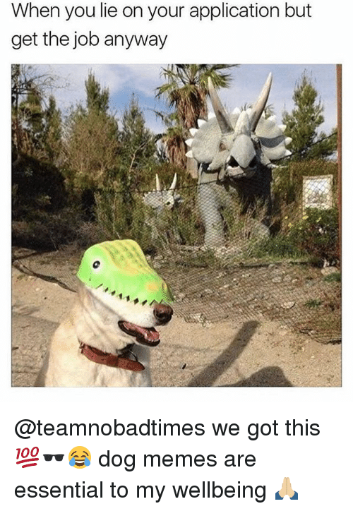 Memes, 🤖, and Got: When you lie on your application but  get the job anyway @teamnobadtimes we got this 💯🕶😂 dog memes are essential to my wellbeing 🙏🏼