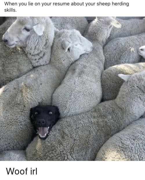when you lie on your resume about your sheep herding skills resume