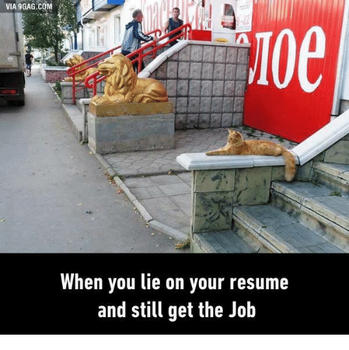 when you lie on your resume and still get the job dank meme on