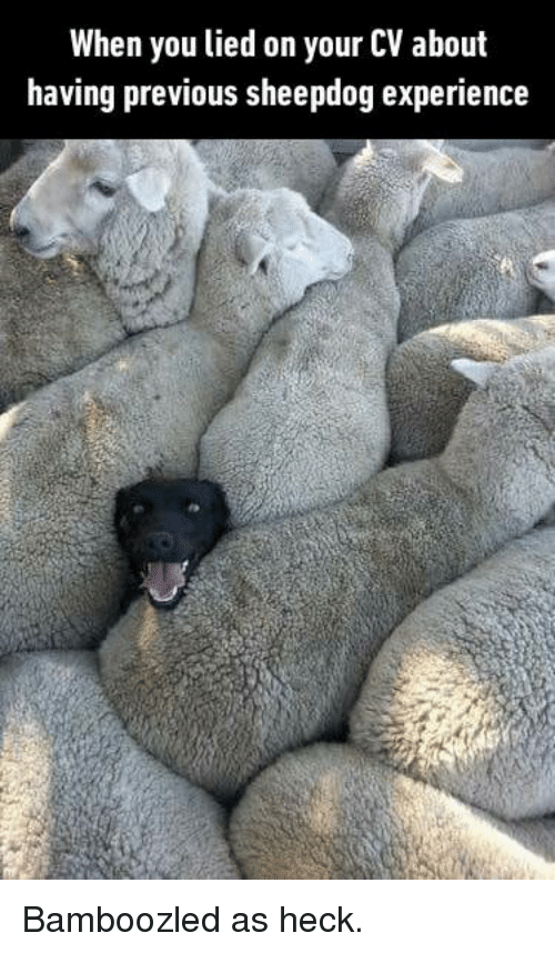 Dank, Experience, and 🤖: When you lied on your CV about  having previous sheepdog experience Bamboozled as heck.