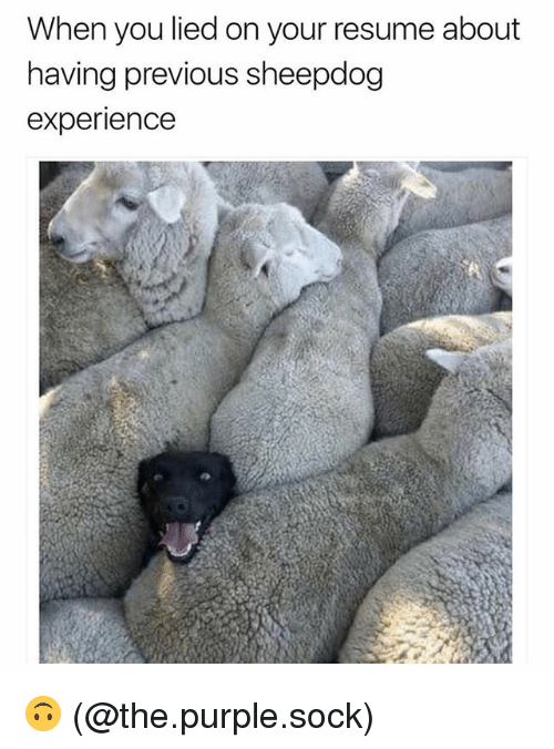 When You Lied on Your Resume About Naving Previous Sheepdog