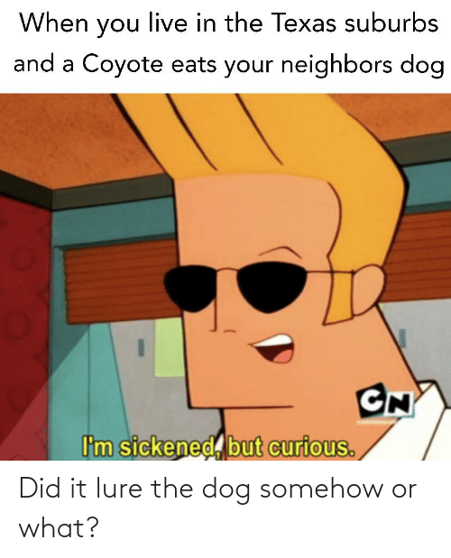 Reddit, Coyote, and Live: When you live in the Texas suburbs  and a Coyote eats your neighbors dog  CN  I'm sickened, but curious. Did it lure the dog somehow or what?