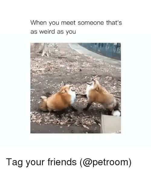 Friends, Funny, and Weird: When you meet someone that's  as weird as you Tag your friends (@petroom)