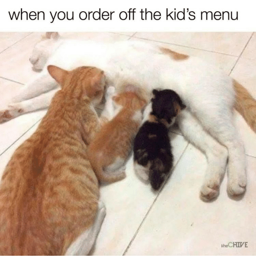 Chive, Kids, and The Chive: when you order off the kid's menu  the CHIVE