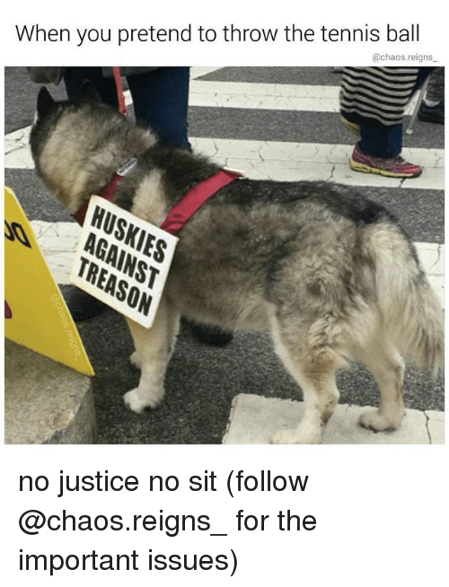Memes, Justice, and Tennis: When you pretend to throw the tennis ball  @chaos.reigns  As no justice no sit (follow @chaos.reigns_ for the important issues)