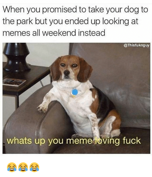 Whats Up You Meme Loving