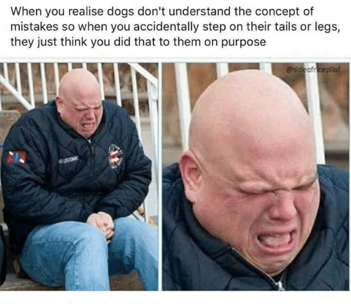 Dank, Dogs, and Mistakes: When you realise dogs don't understand the concept of  mistakes so when you accidentally step on their tails or legs,  they just think you did that to them on purpose  esideofreepilaf